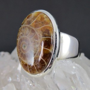 Anillo Ammonite y plata