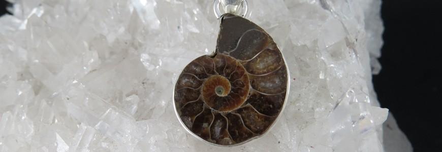 Ammonite | La Tienda de los Minerales
